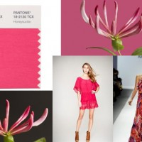 Pantone color of the year 2011-honeysuckle