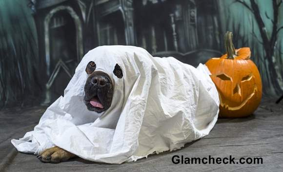 Ghost Costume for your Dog Halloween DIY