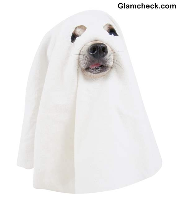 sc 1 st  Glamcheck & Halloween DIY Ghost Costume for your Dog
