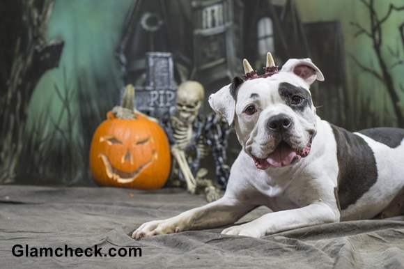 Halloween Ghost Costume for your Dog
