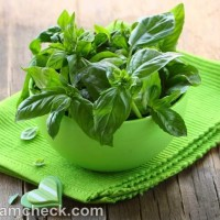 health benefits of basil tulsi