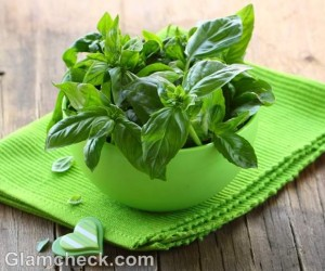 health benefits of basil tulsi