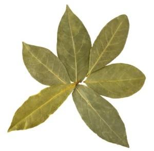Bay Leaf Health Benefits